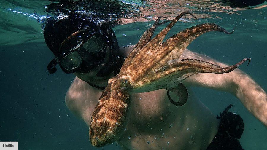 Best Netflix documentaries: My Octopus Teacher