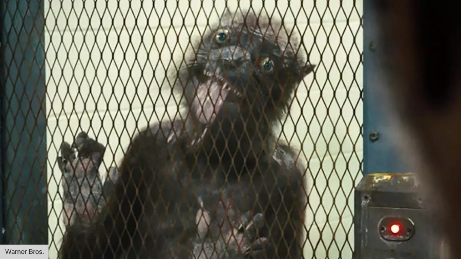 James Gunn shares the screen test for Weasel in The Suicide Squad